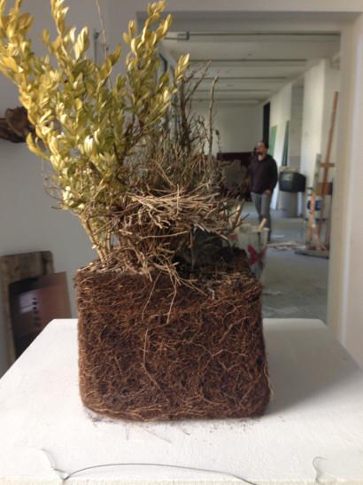 2012-Plant-1.jpg